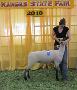 2nd place winter ewe lamb